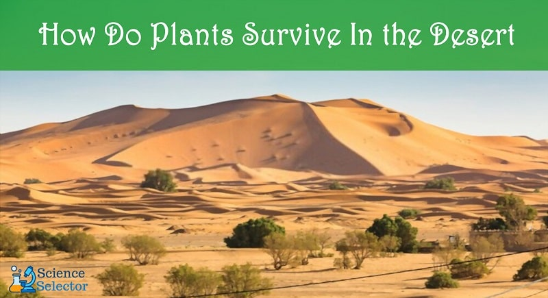 how can plants survive in the desert